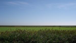 Dutch landscape. Anyone for Mars?